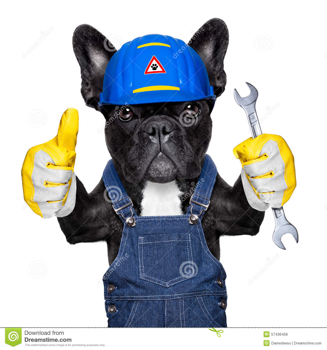 Handyman Dog Stock Photo