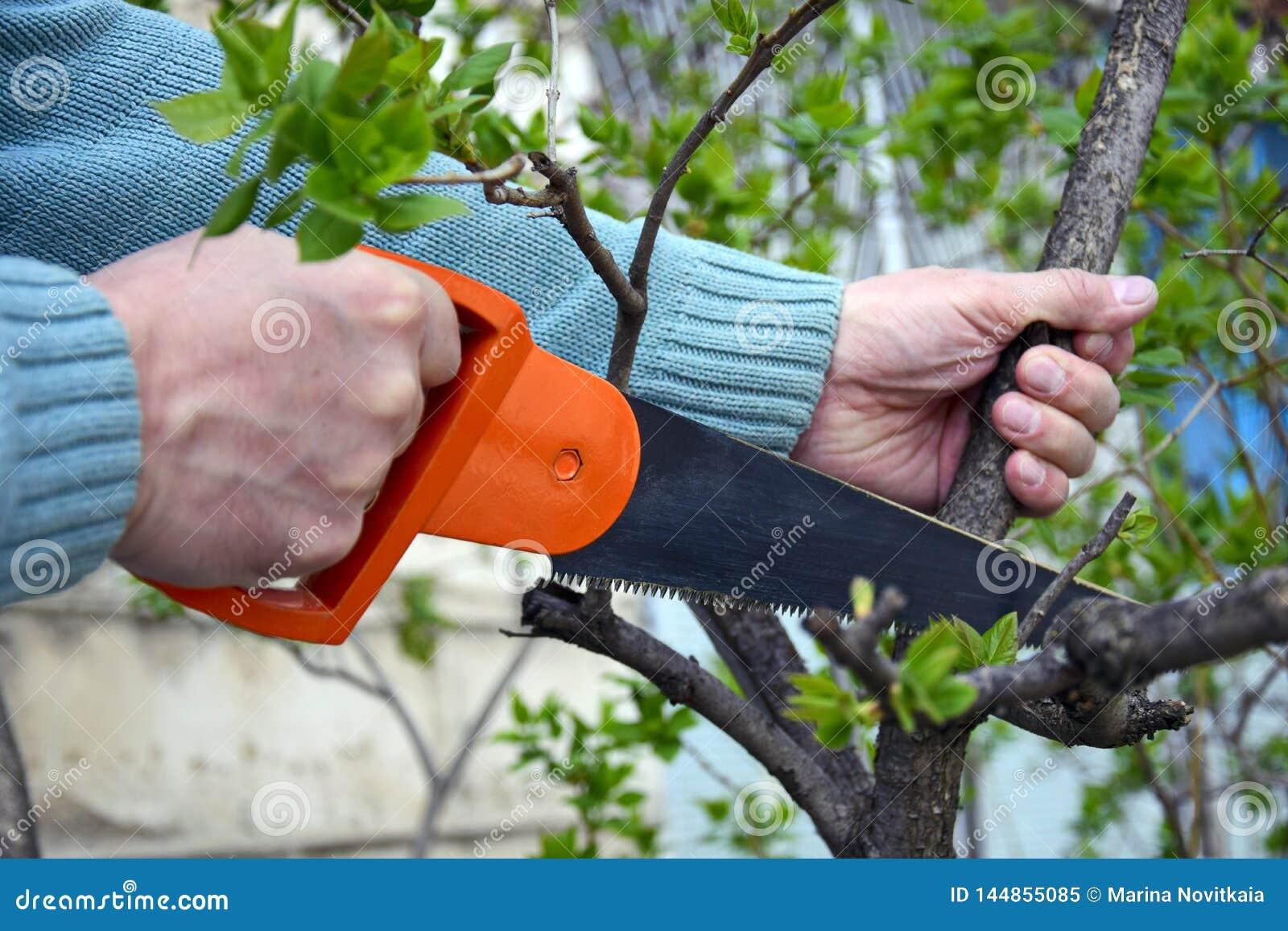 Handzaag op hout in mannelijke handen