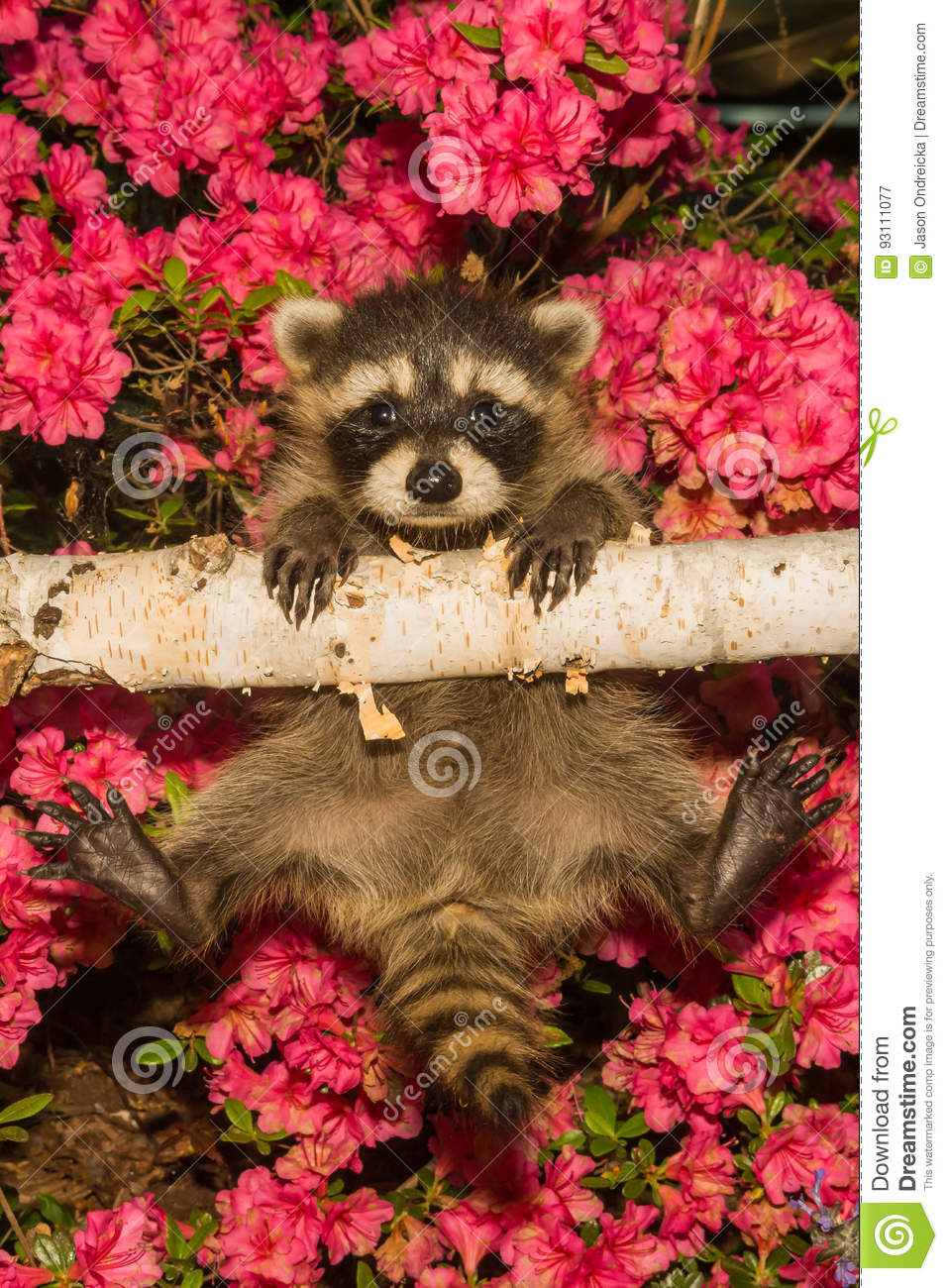 Hang in there stock image. Image of flora, holding, curious - 93111077
