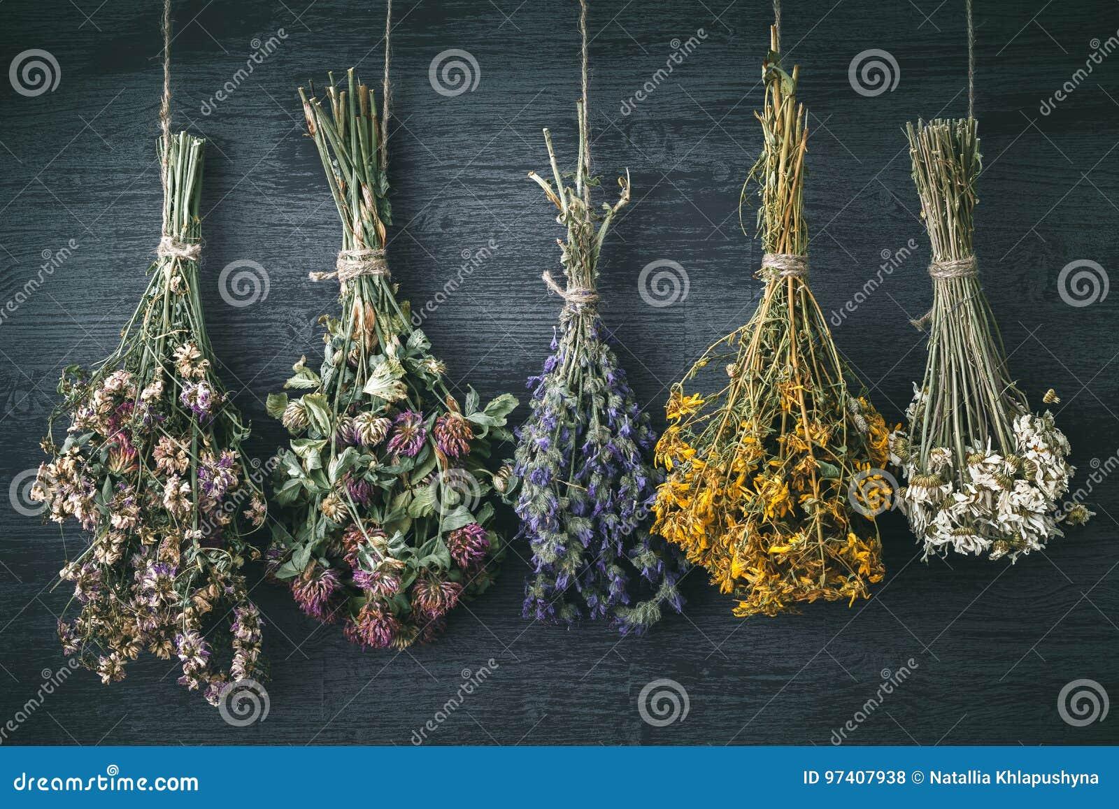 Hangende bossen van geneeskrachtige kruiden en bloemen Kruiden perforatum Medicine