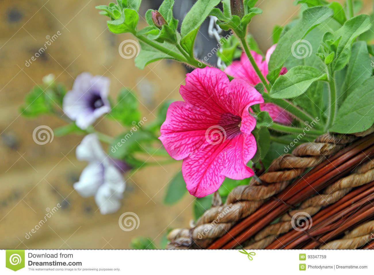 Hanging Basket Flowers Stock Image Image Of Grow Photo 93347759