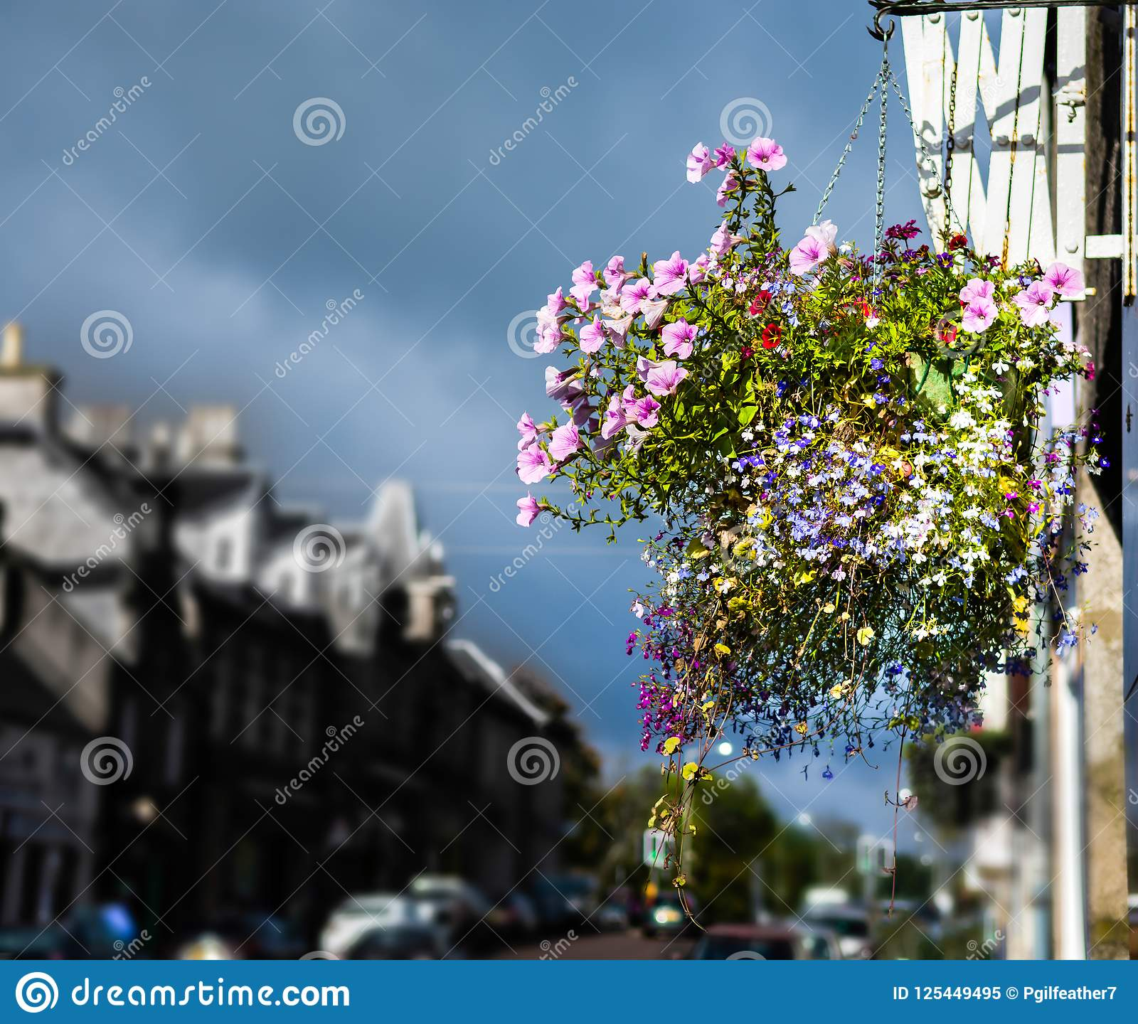 Hanging Basket With Pink, Red, Violet And Magenta Coloured Flowers ...