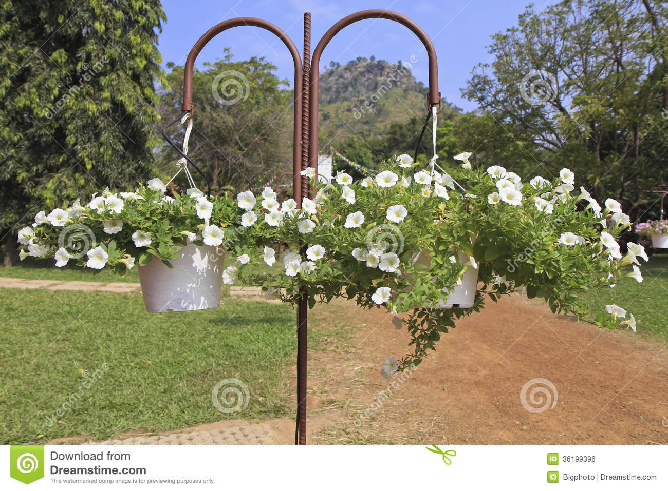 White flowers for hanging baskets image collections flower hanging baskets with white petunia flowers hanging in a garden hanging baskets with white petunia flowers workwithnaturefo