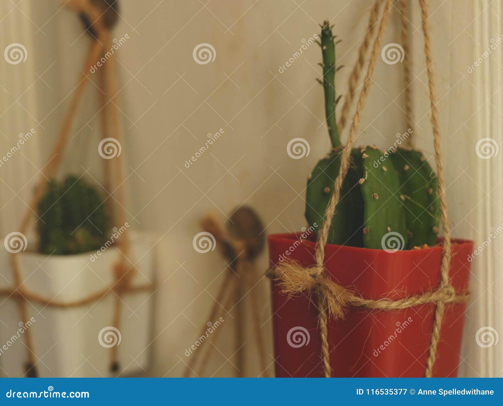 Hanging Cactus On White Wooden Door - Vintage Garden Idea Stock ...