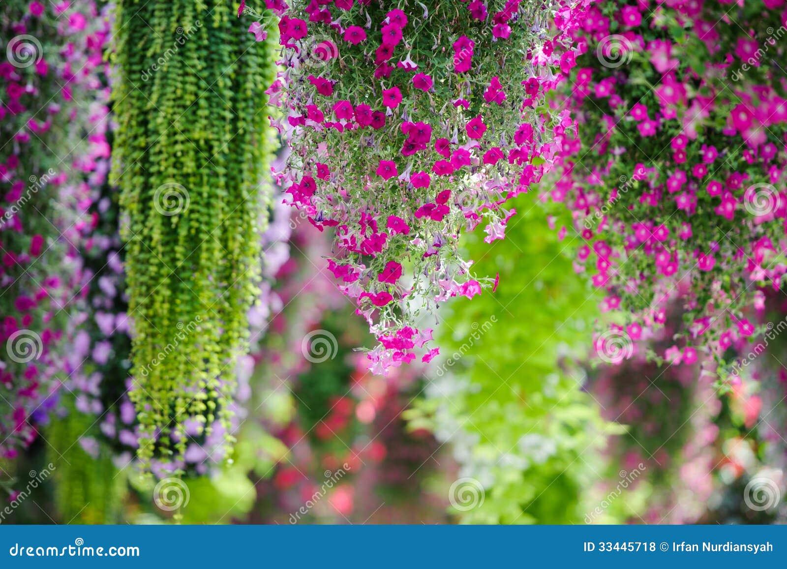 Hanging Flower Royalty Free Stock Photos - Image: 33445718