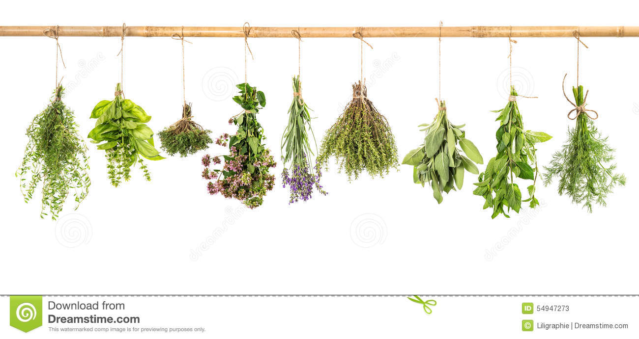 Hanging Fresh Herbs Basil Sage Thyme Dill Mint