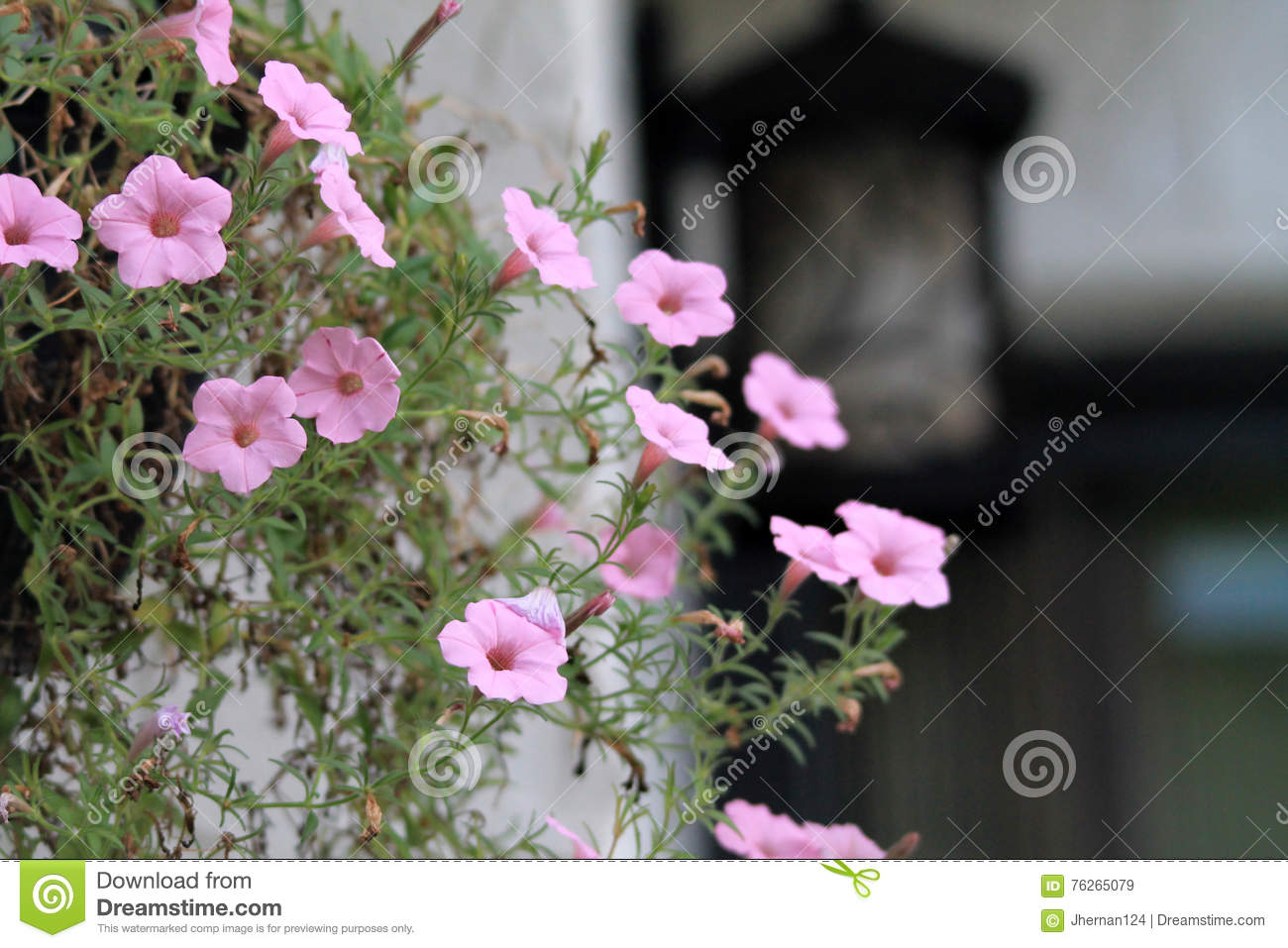 Hanging Pink Flowers Stock Image Image Of Bronze Faded 76265079