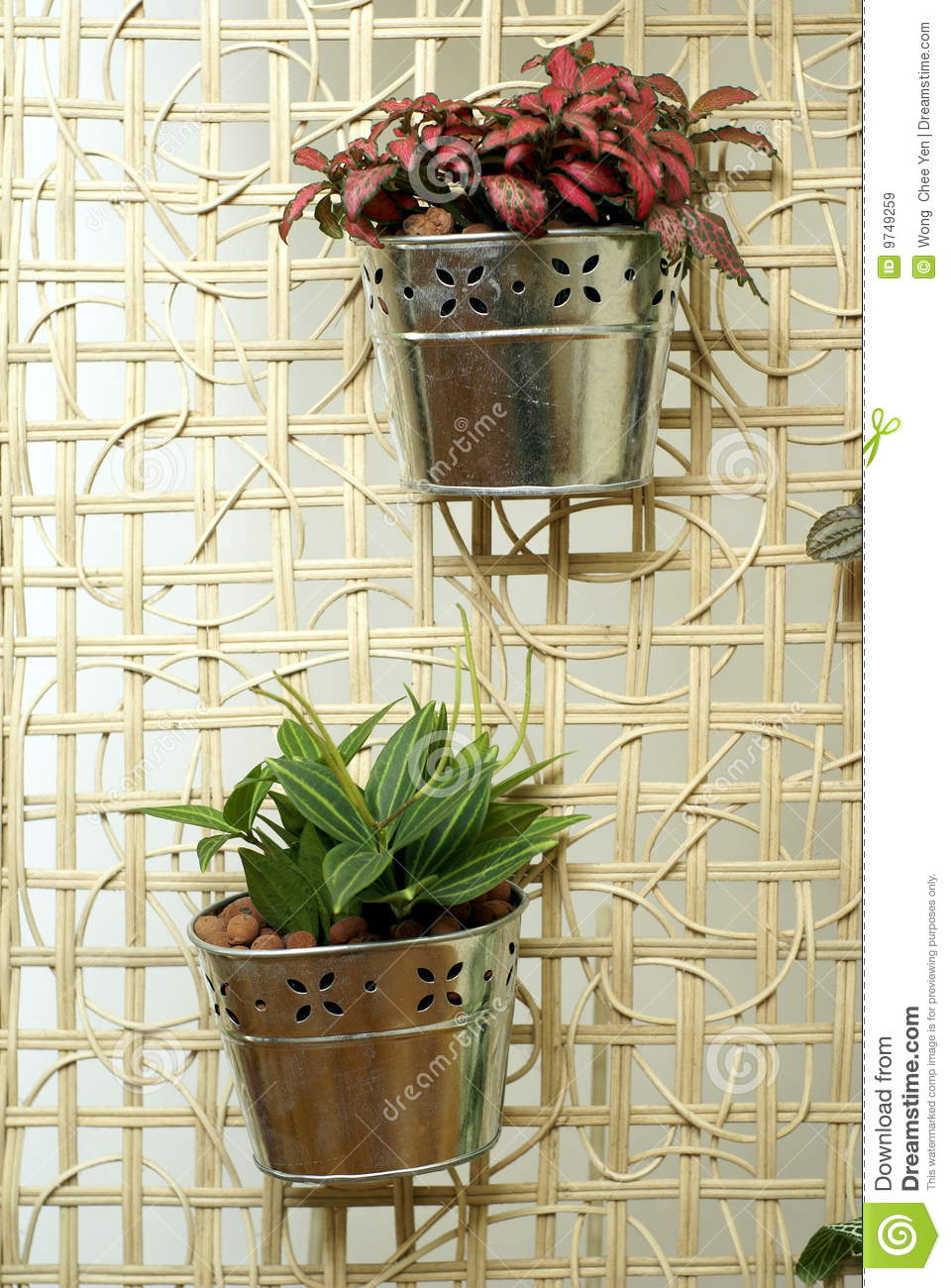 Hanging Pot Plants Stock Image Image Of Flora Pots Home
