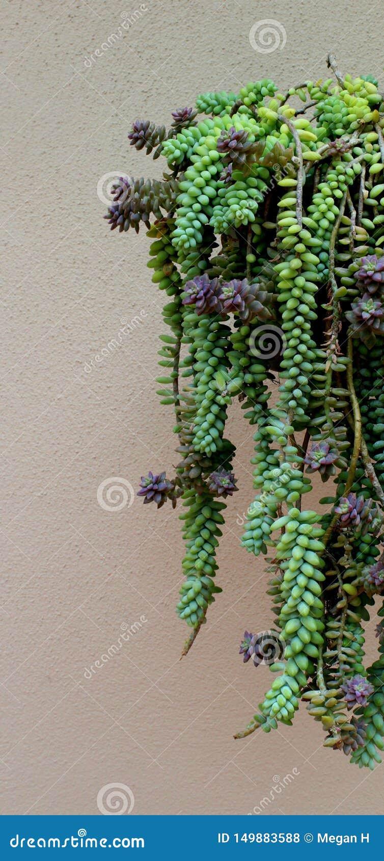 Hanging Succulents Stock Photo Image Of Arrangement 149883588