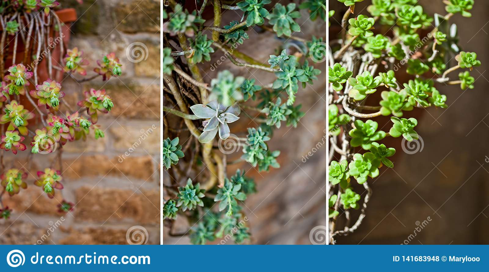 251 Hanging Succulents Photos Free Royalty Free Stock Photos From Dreamstime