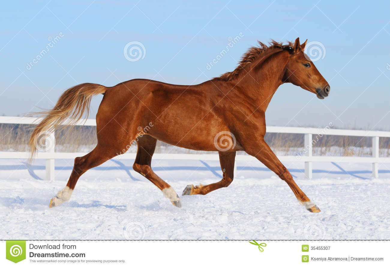 Image Result For Hanoverian Horse Prices