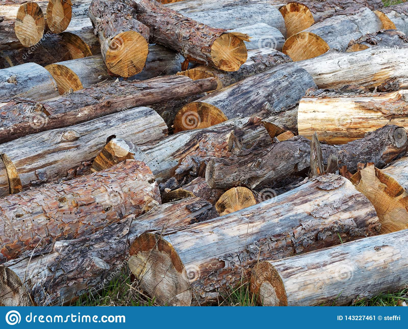 Haphazardly Stacked Pile of Wood Logs
