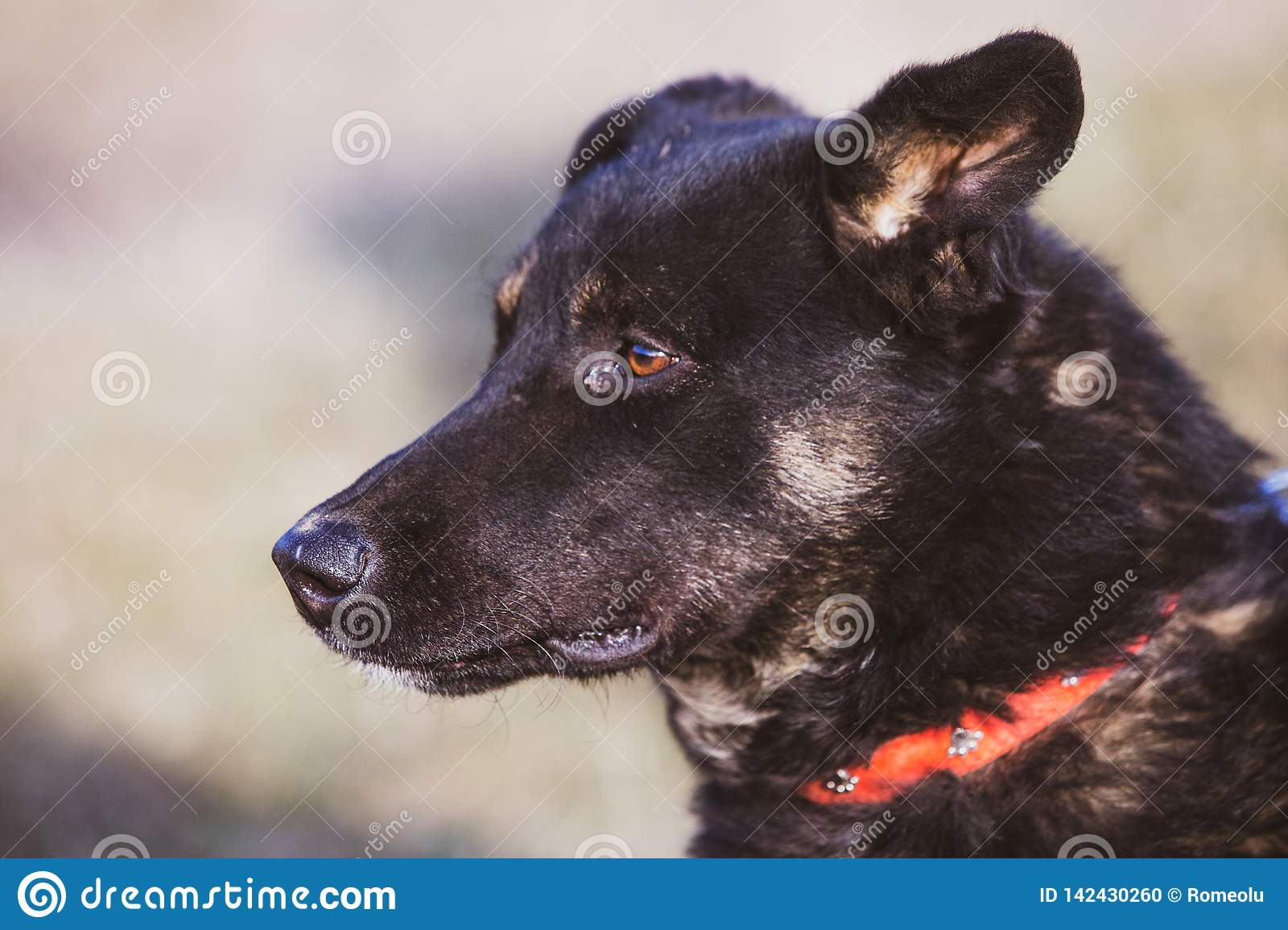 Happy adopted black dog, adopt don`t shop