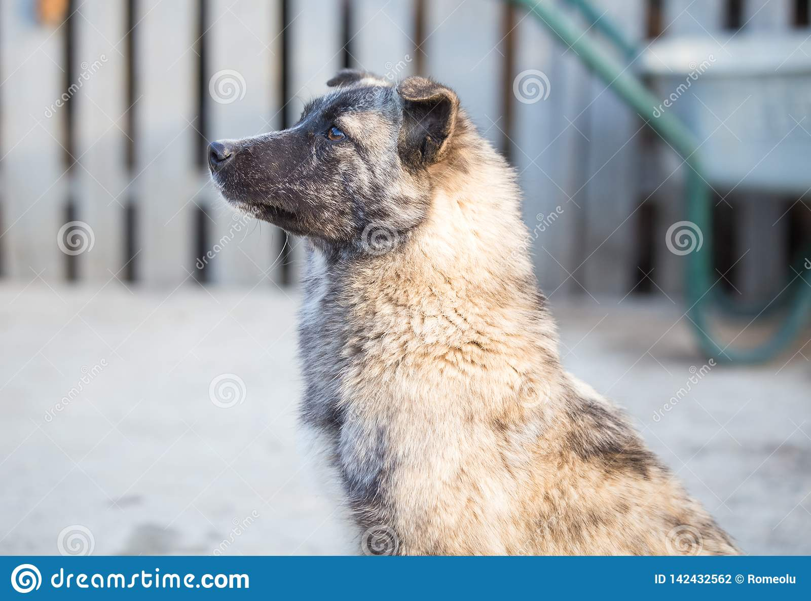 Happy adopted stray dog, adopt don`t shop