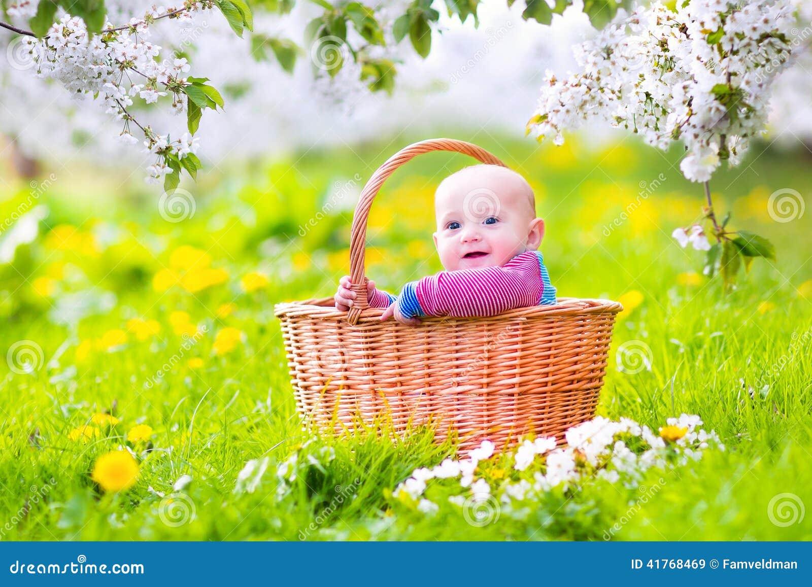 happy baby in basket in blooming apple tree garden stock