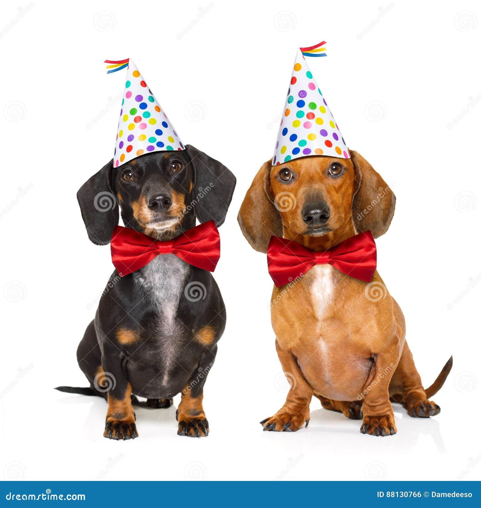 Happy Birthday Dog Stock Photo Image Of Placard Happy 88130766