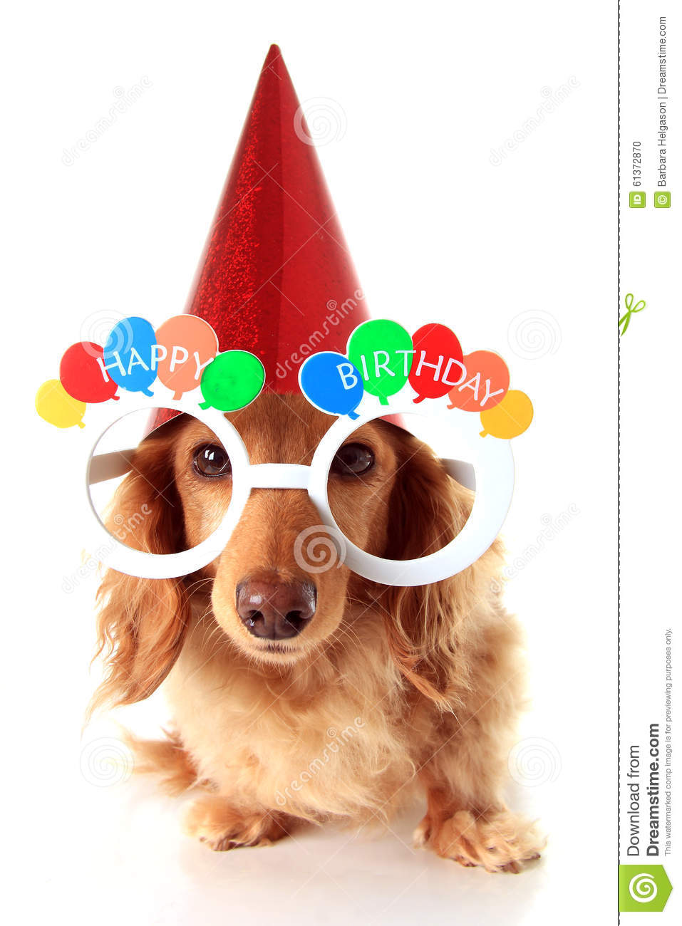 birthday dogs images happy birthday dog stock photo image of happy festive 3518