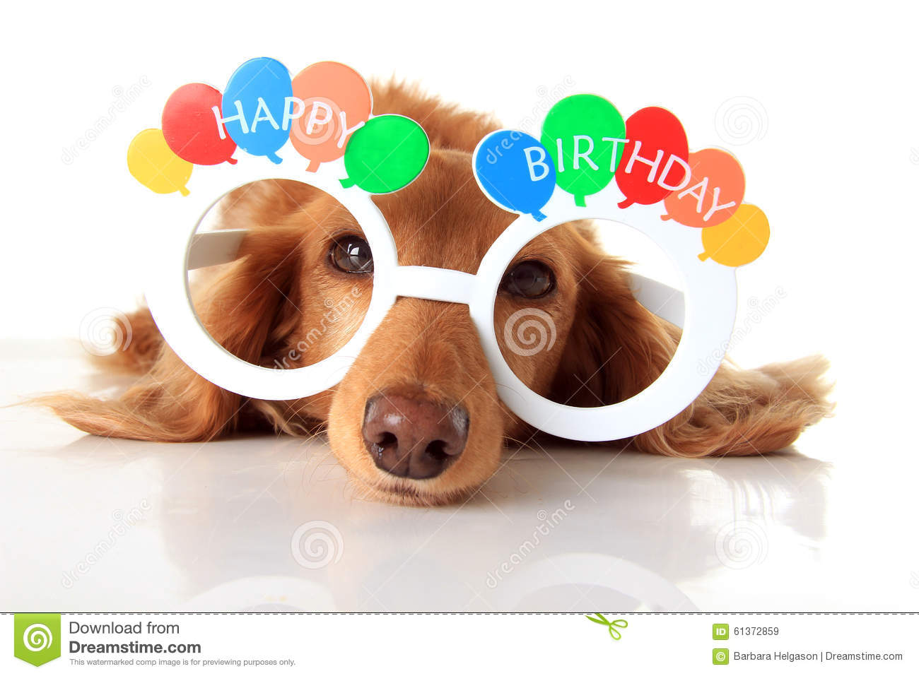 Dachshund Puppy Wearing Happy Birthday Glasses Also Available In Vertical