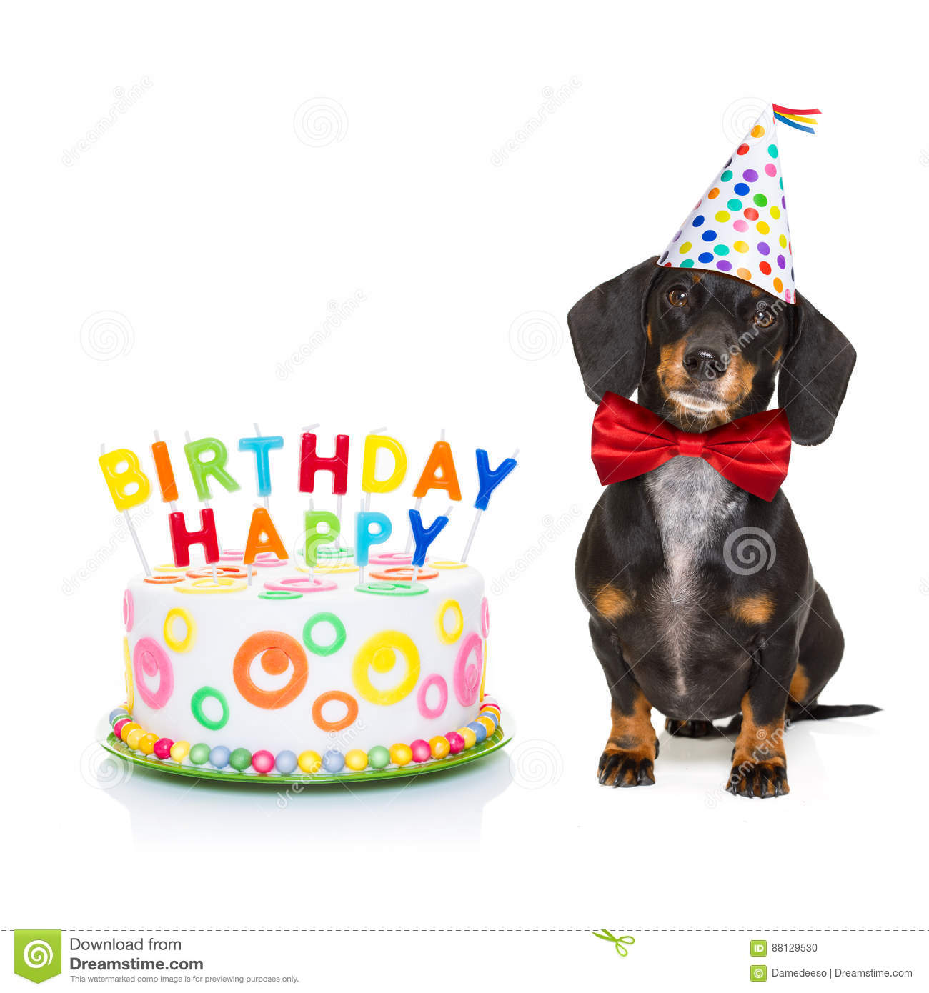 Dachshund Or Sausage Dog Hungry For A Happy Birthday Cake With Candles Wearing Red Tie And Party Hat Isolated On White Background