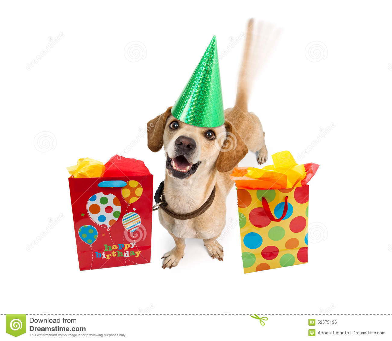 Happy Birthday Dog With Gift Bags