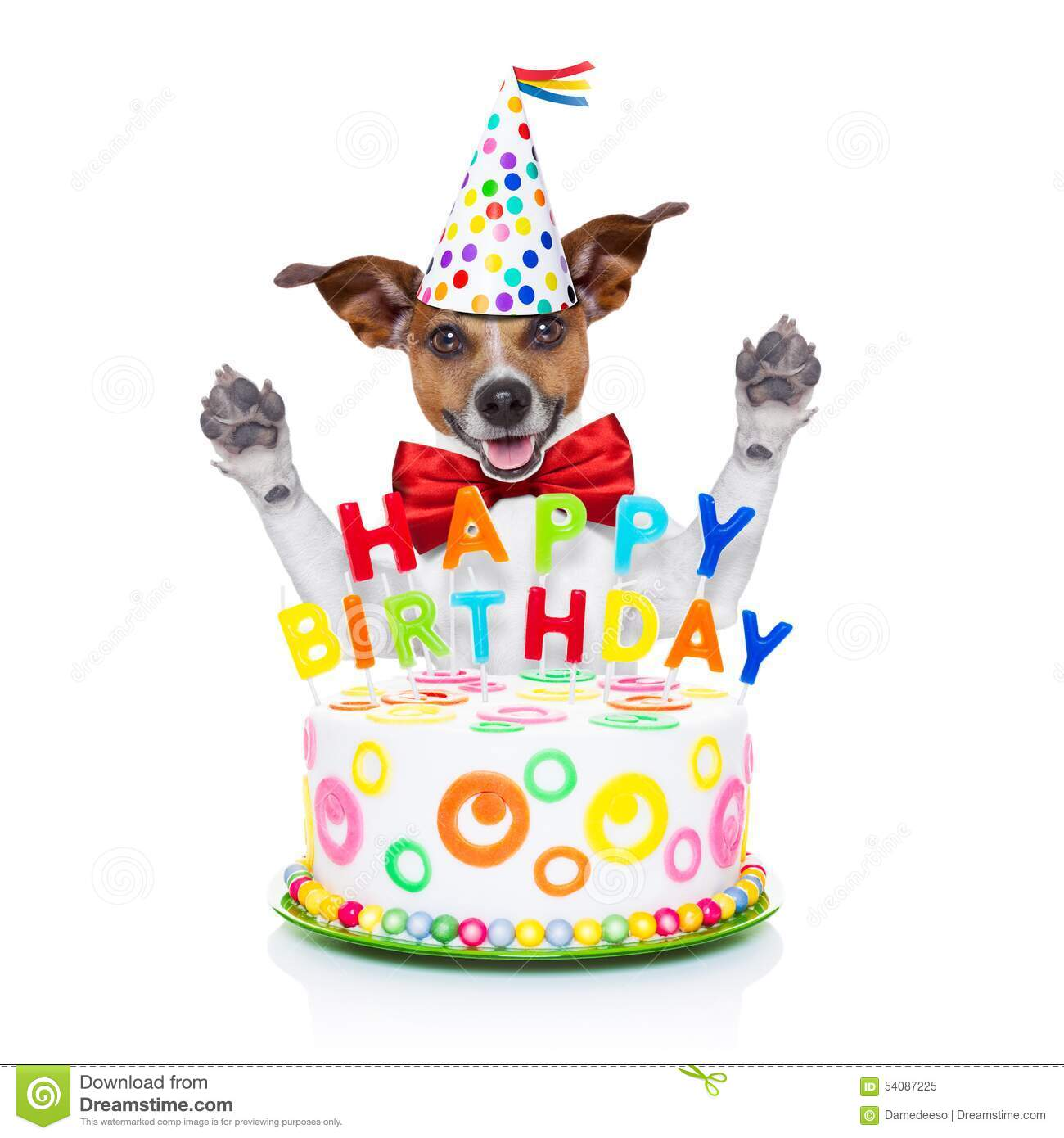 Happy Birthday Dog Stock Image Of Holiday Decoration