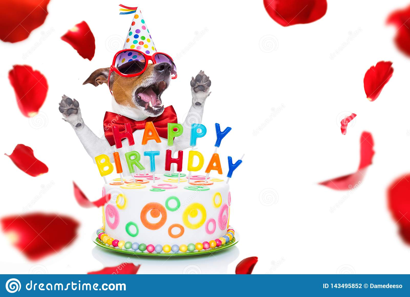 Admirable Happy Birthday Dog Stock Photo Image Of Laugh Funny 143495852 Personalised Birthday Cards Petedlily Jamesorg
