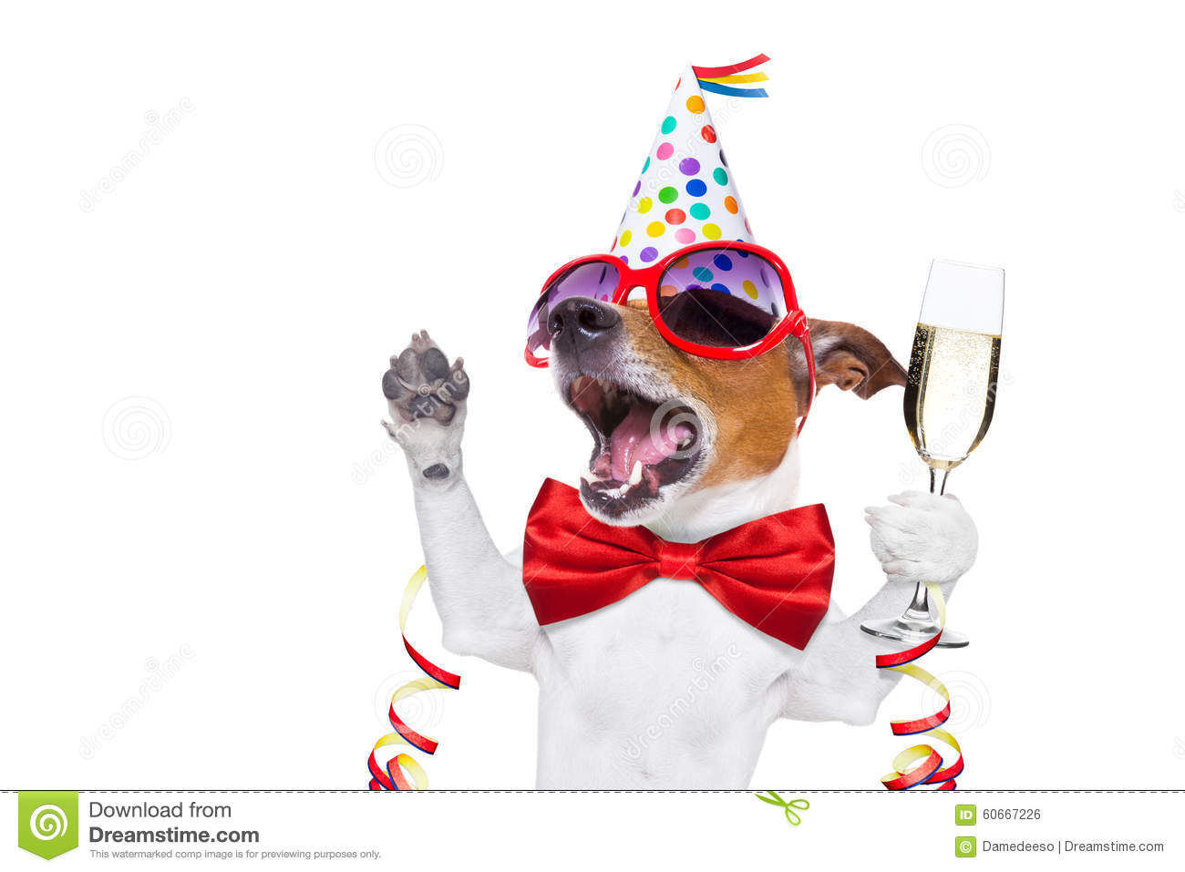 Happy Birthday Dog Stock Photo Image Of December Toast