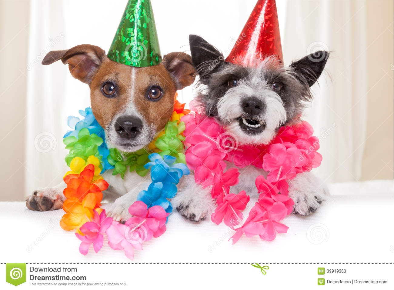 Happy Birthday Dogs Stock Image Of Joke Flower