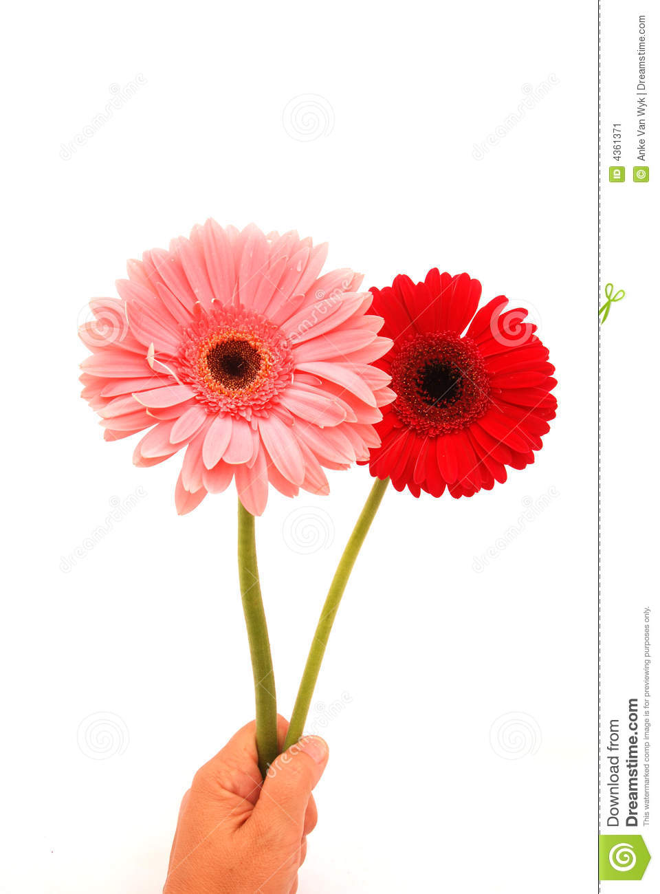 Happy birthday flowers hand stock image image of daisy gerbera happy birthday flowers hand izmirmasajfo