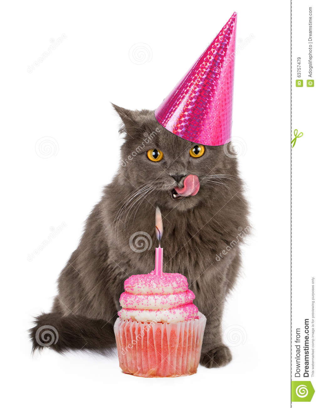 Happy Birthday Party Cat With Pink Cupcake Stock Image Image Of