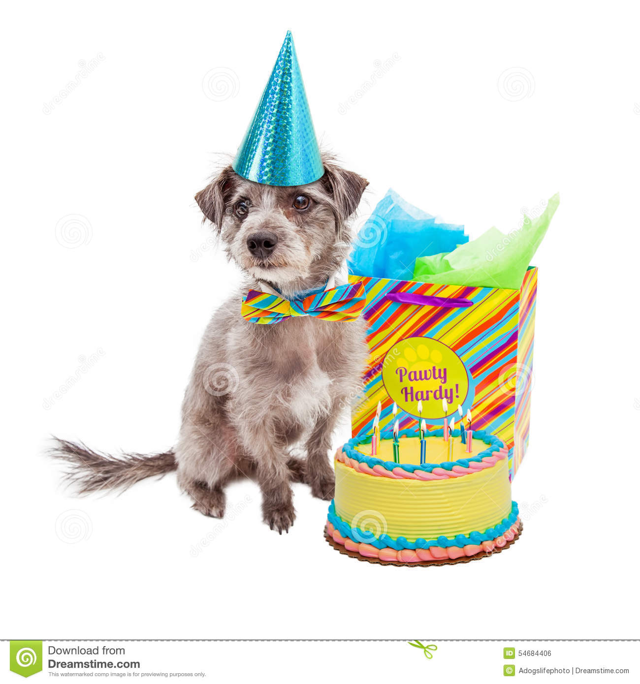 Cute Little Terrier Dog Wearing A Birthday Hat Sitting Next To Cake And Gift Bag