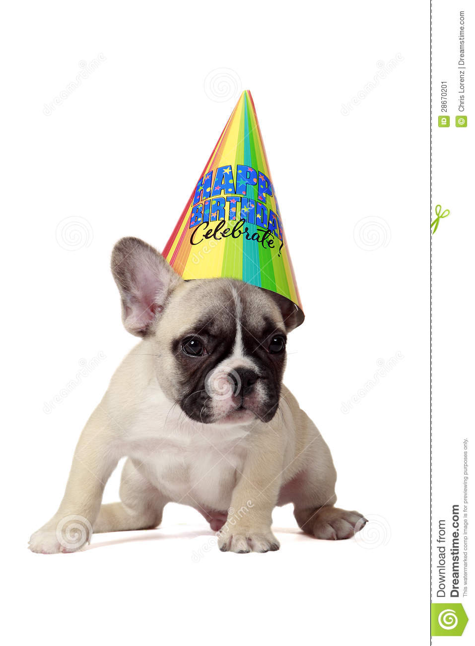 happy birthday puppy stock image image of puppy  white 28670201 French Bulldog Silhouette free clipart french bulldog