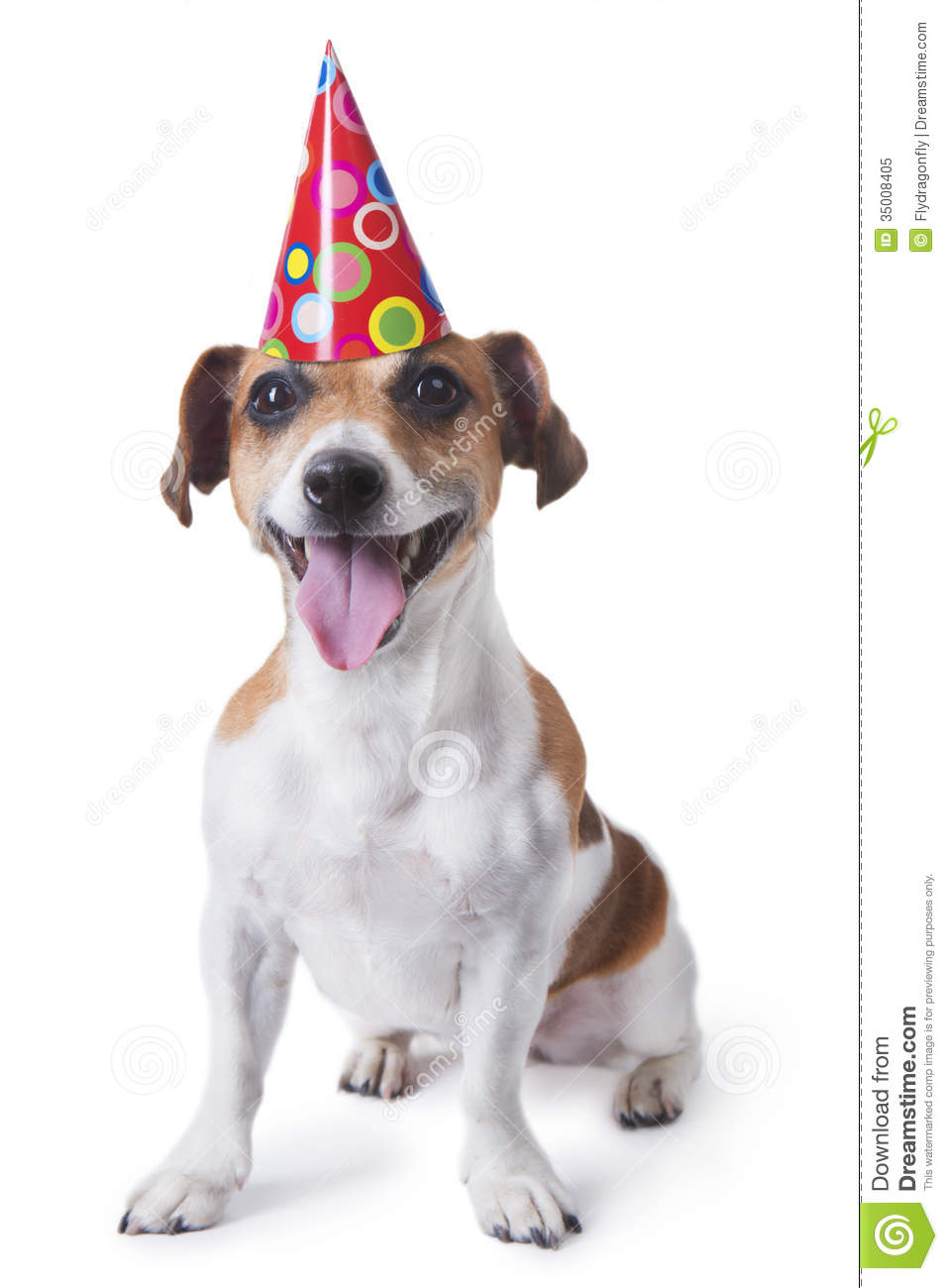 Happy Birthday Puppy Stock Image Of Color Celebrating