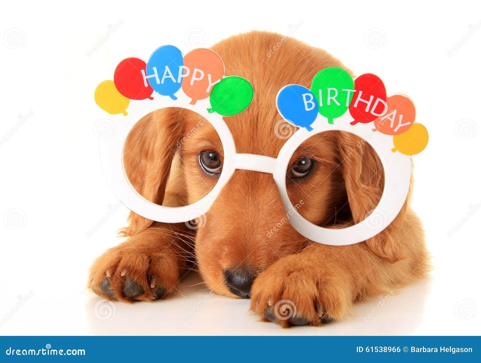 happy birthday puppy stock photo image of submissive