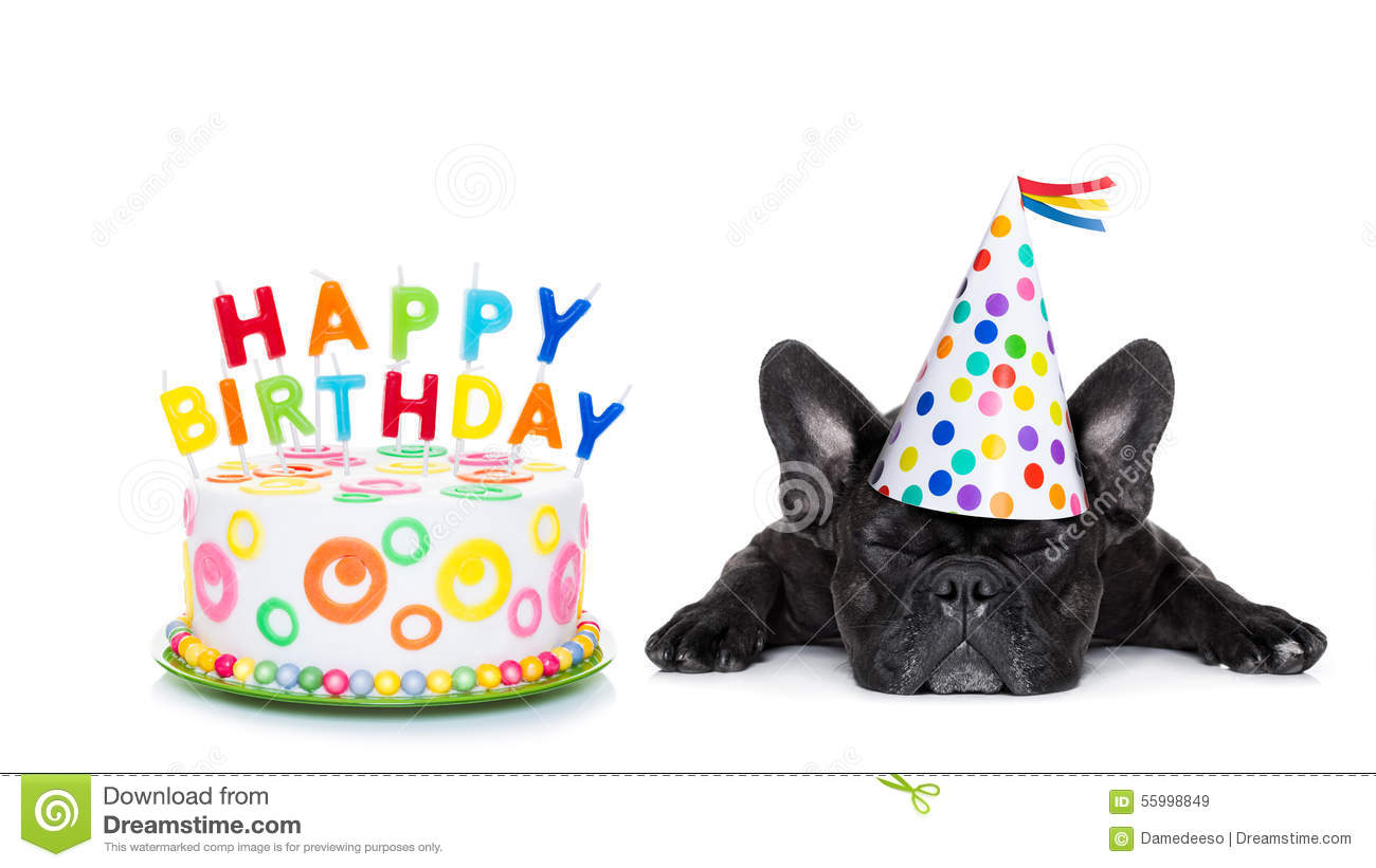 happy birthday sleeping dog stock photo - image: 55998849