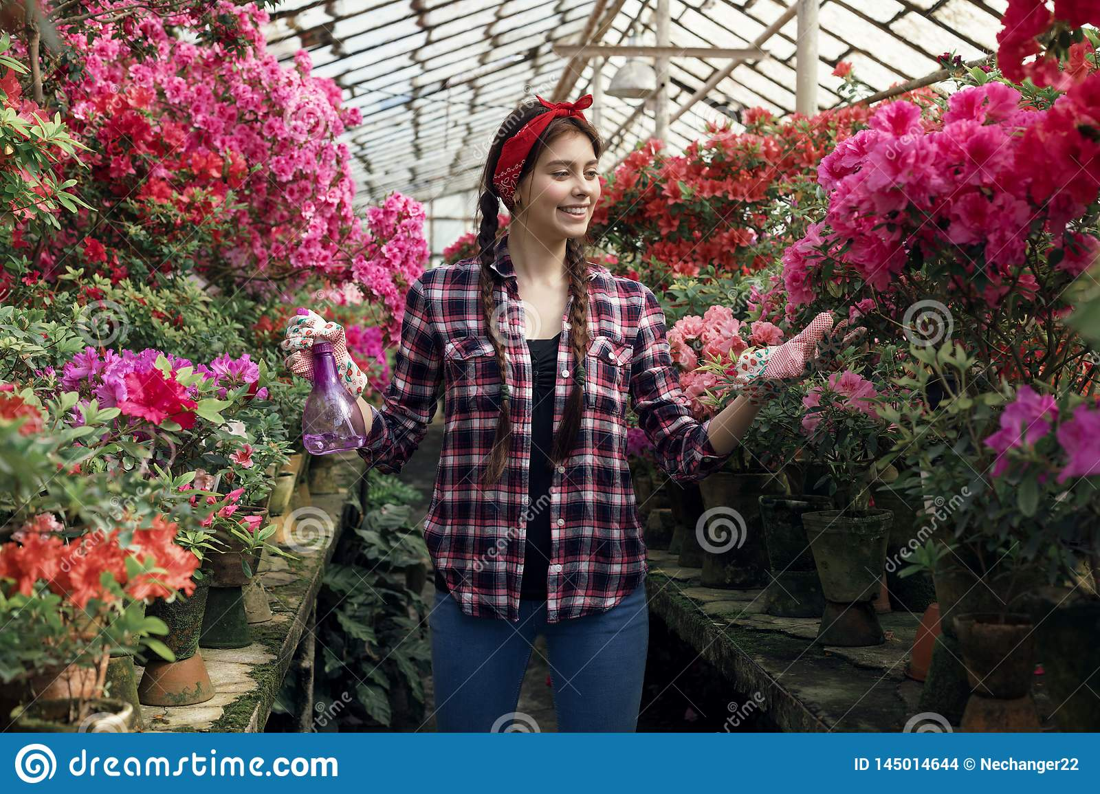Happy brunette woman gardener with pink and red flowers in a greenhouse wearing plaid shirt with a red headband