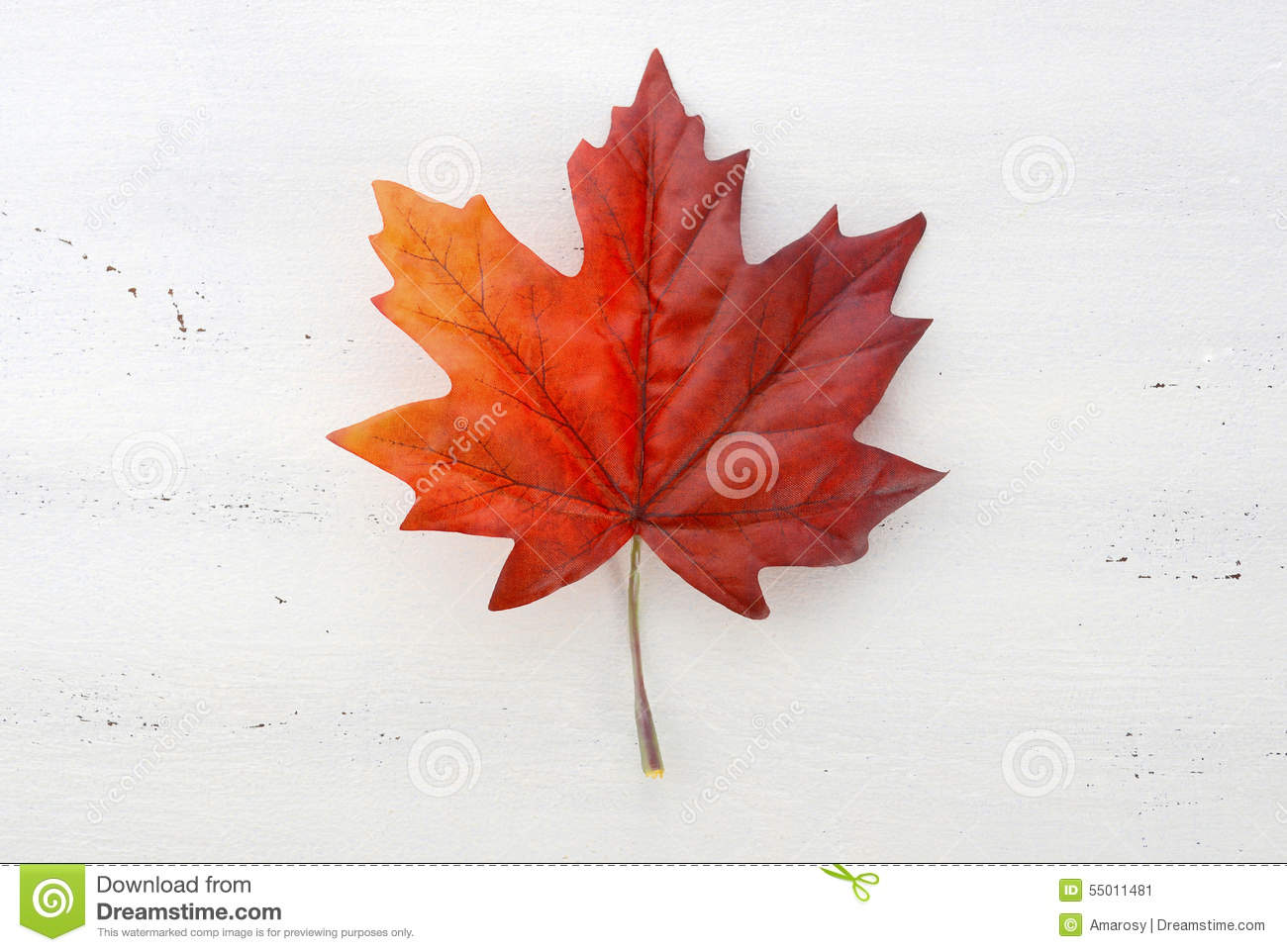 Happy Canada Day Red Silk Maple Leaf Stock Image Image