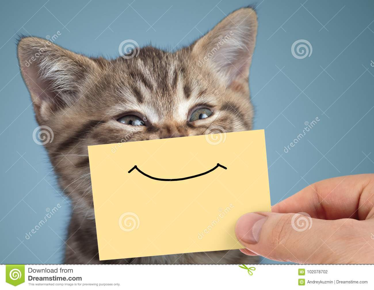 Happy cat closeup portrait with funny smile on cardboard