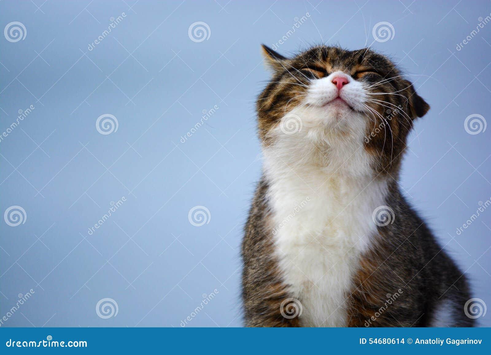 Happy Cat Stock Photo Image 54680614