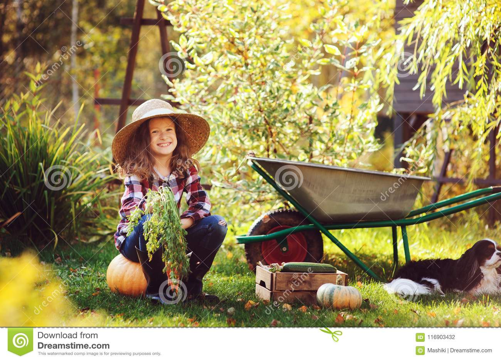 Happy child girl with spaniel dog playing little farmer in autumn garden