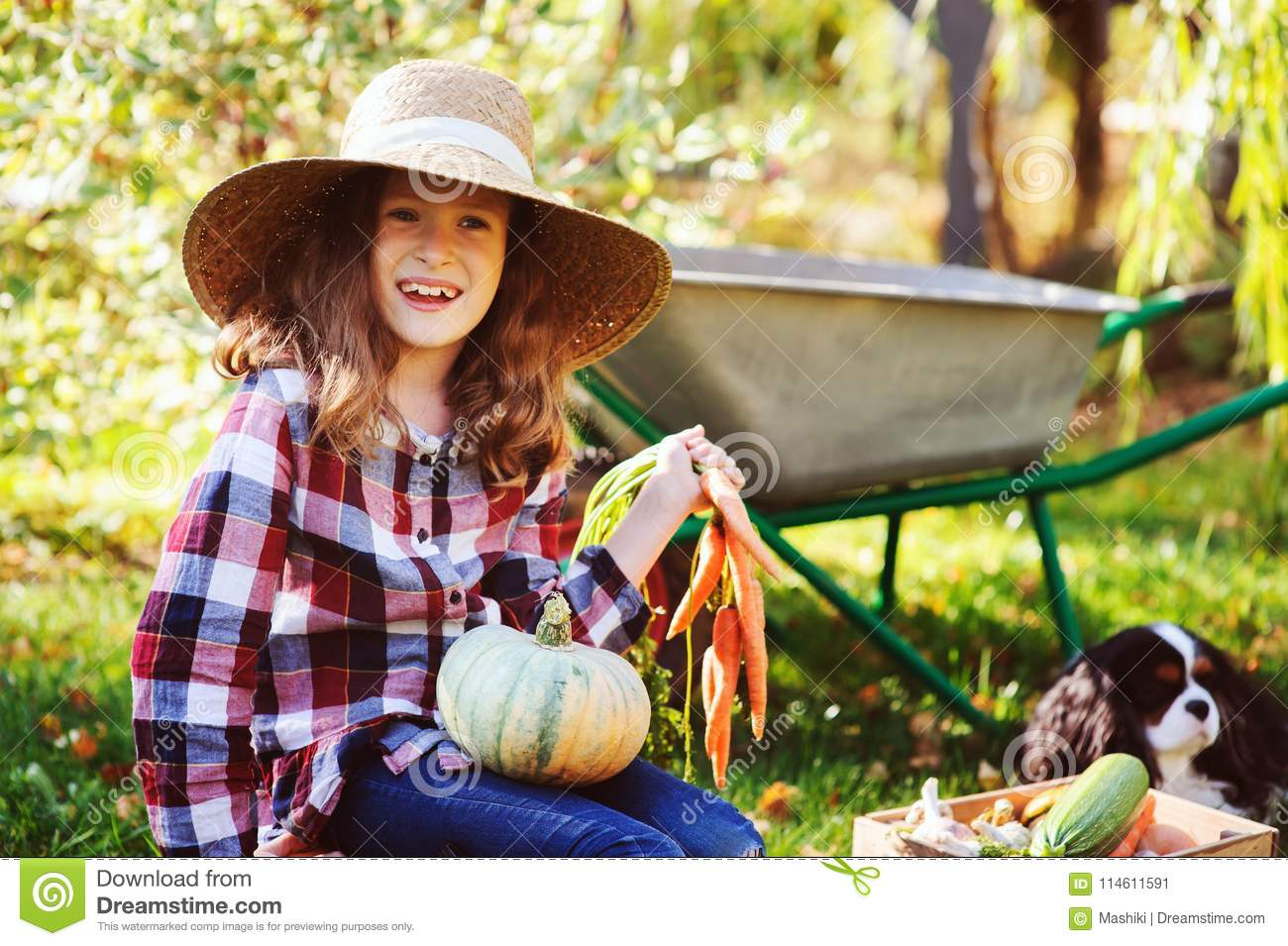 Happy child girl with spaniel dog playing little farmer in autumn garden and picking vegetable harvest