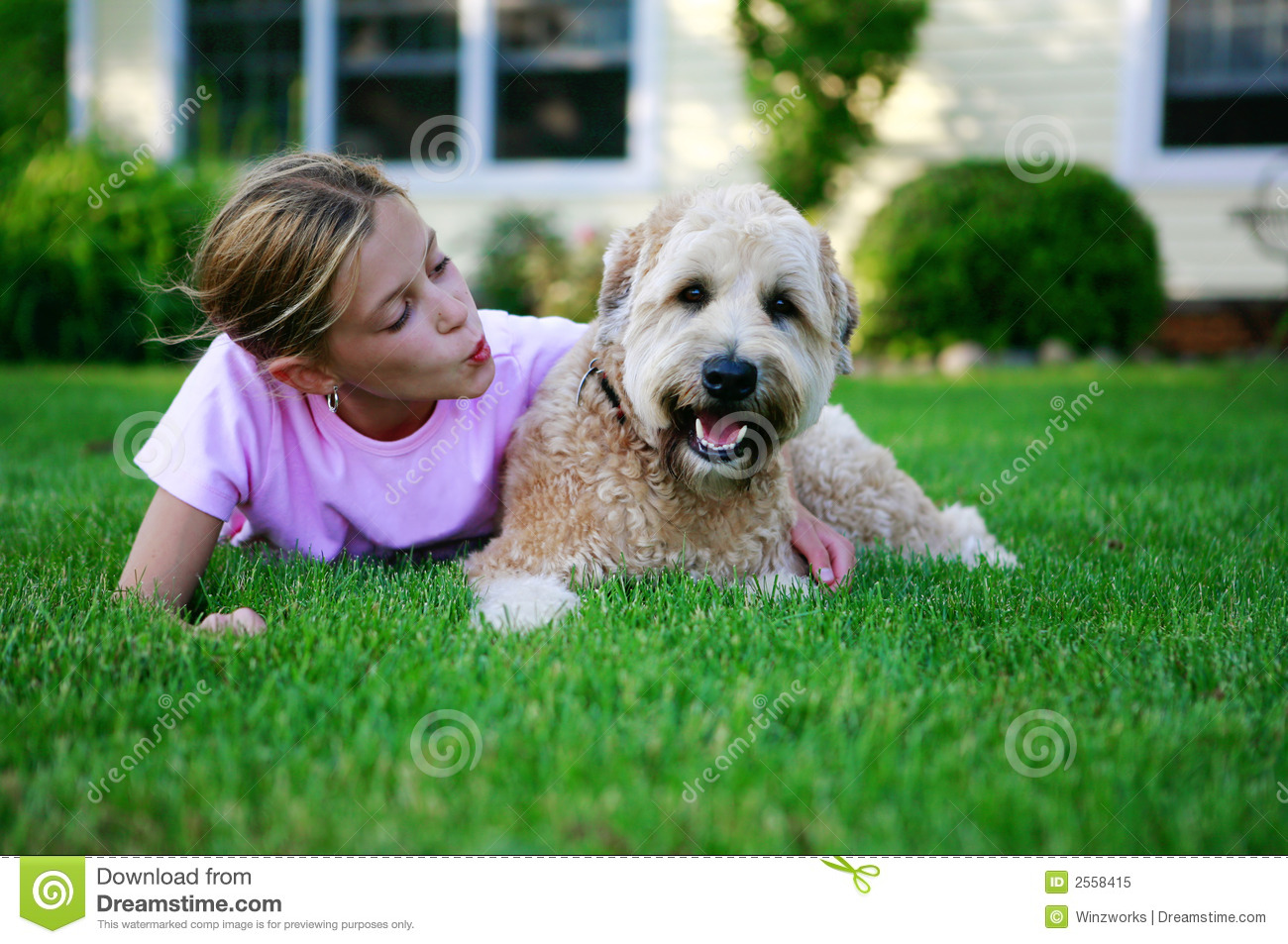 Happy Dog Royalty Free Stock Photo - Image: 2558415 - photo#25
