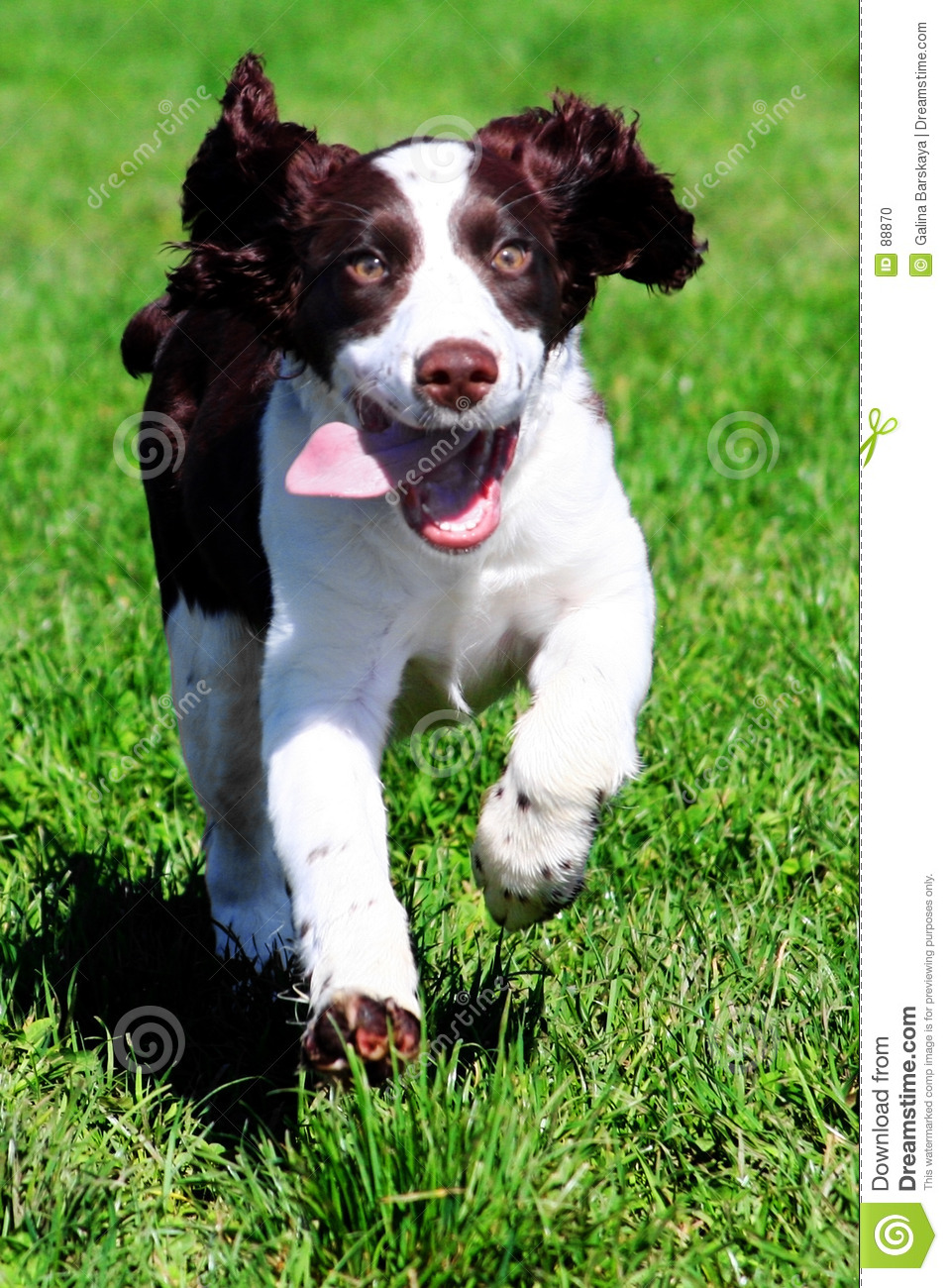 Download Happy dog stock photo. Image of nose, friend, closeup, funny - 88870