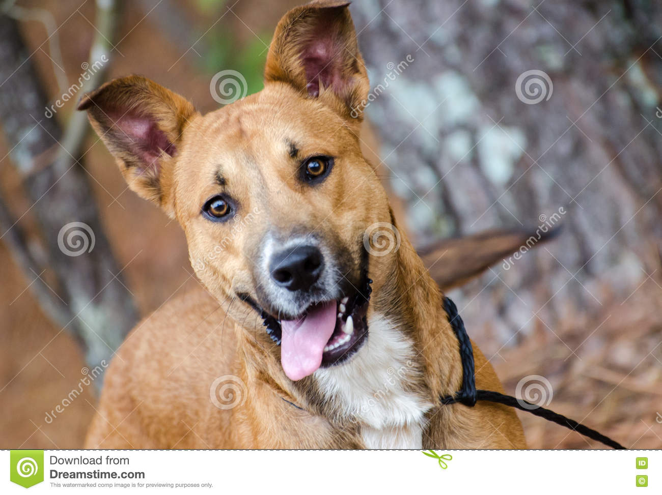 Happy Dog Tail Wagging Stock Photos - 245 Images - photo#27