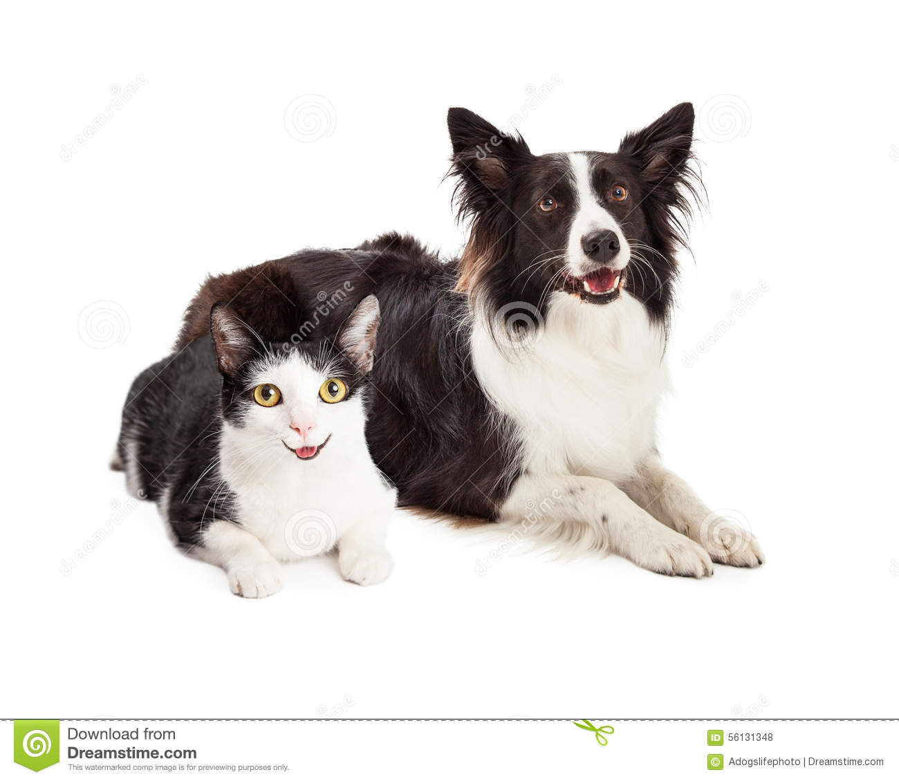 Happy Dog And Cat Laying Together Stock Photo - Image ...