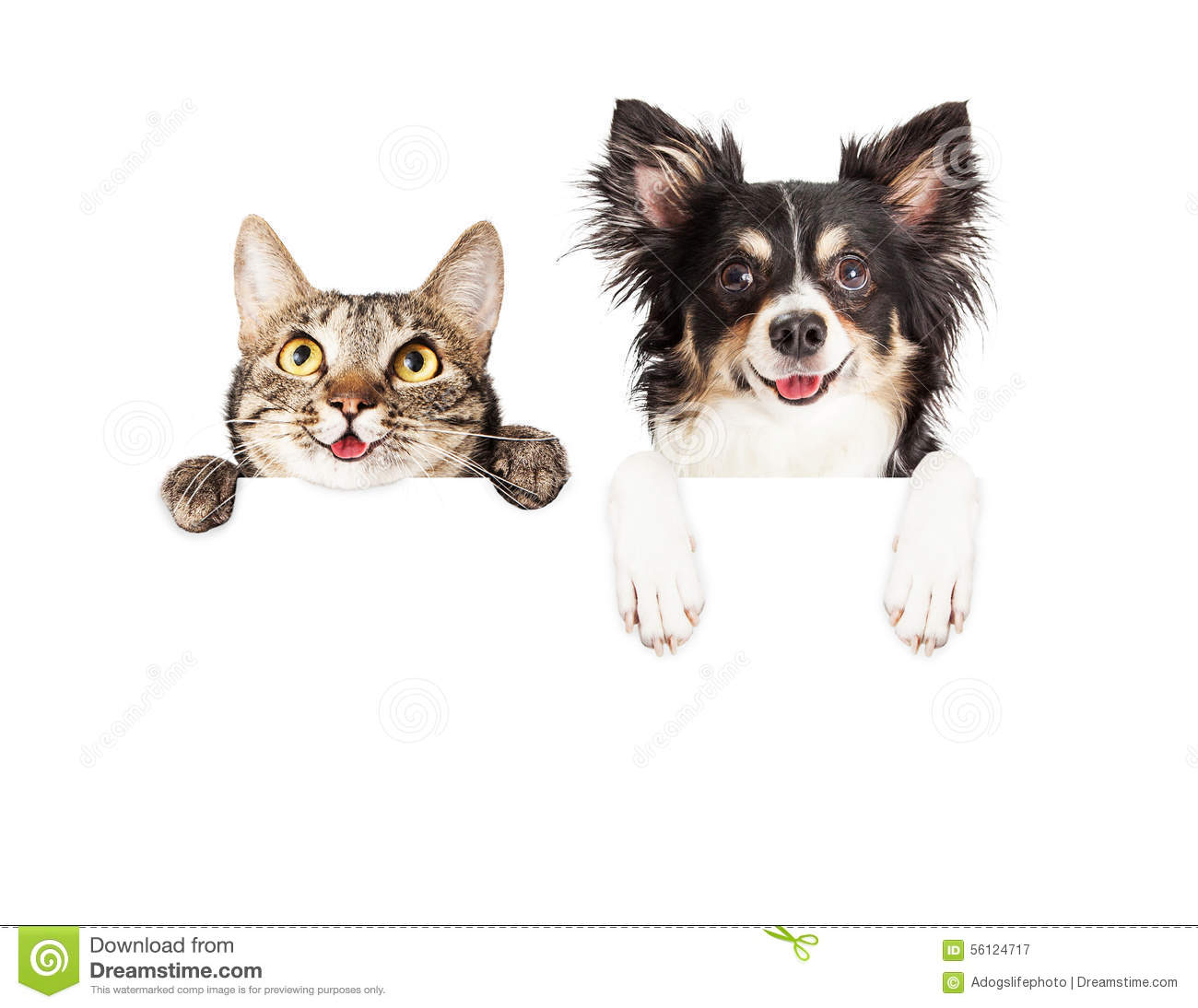 Happy Dog And Cat Over White Banner Stock Photo Image