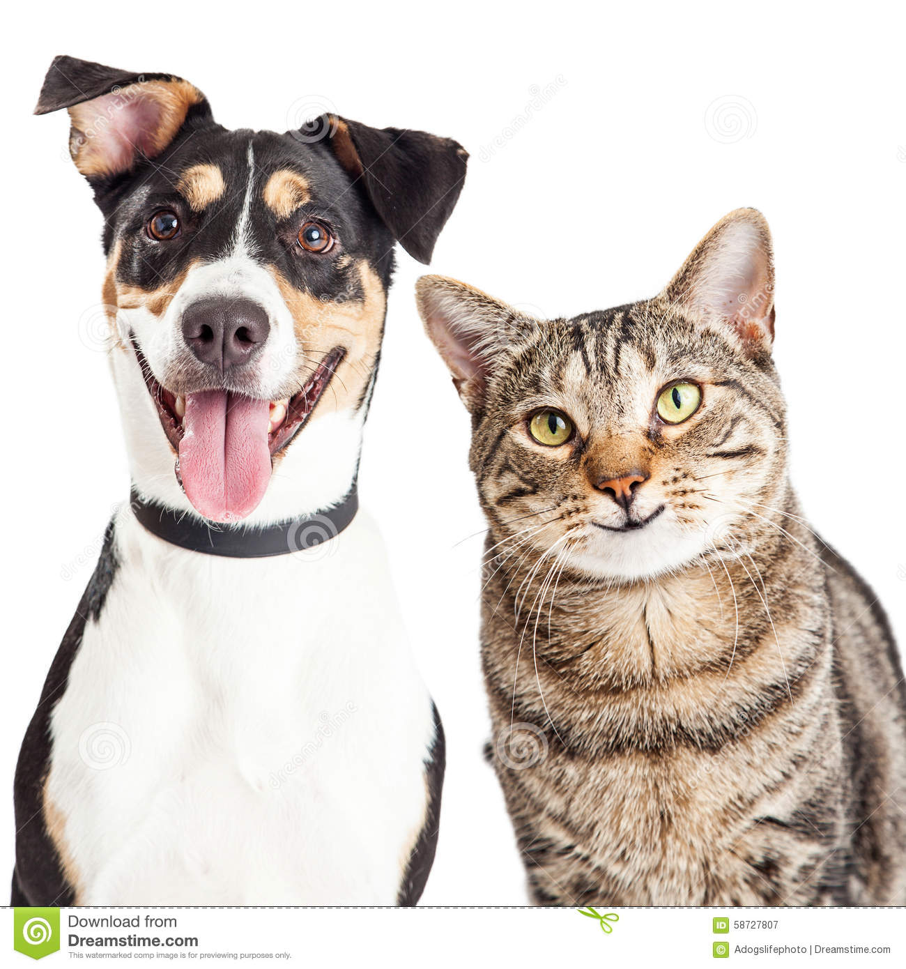 Happy Dog And Cat Together Closeup Stock Photo - Image: 58727807 Smiling Dog And Cat
