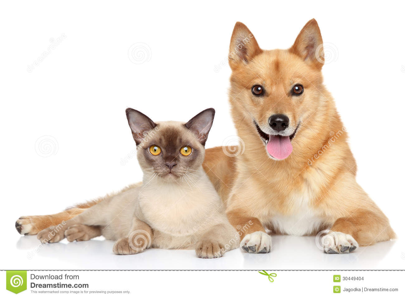 Happy Dog And Cat Together Stock Images - Image: 30449404 - photo#49