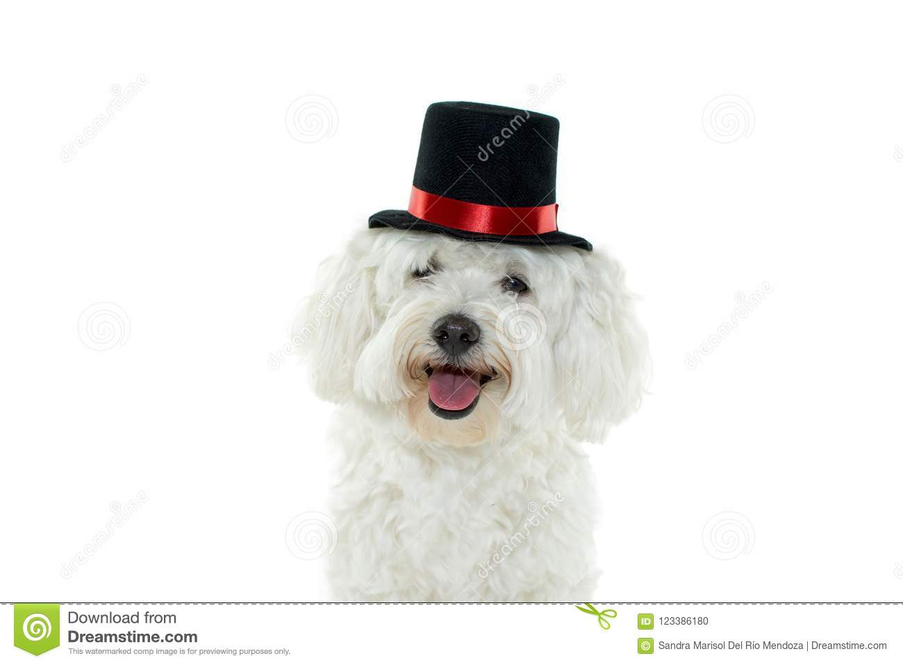 HAPPY DOG COSTUME MAGICIAN CELEBRATING HALLOWEEN. ISOLATED ON W