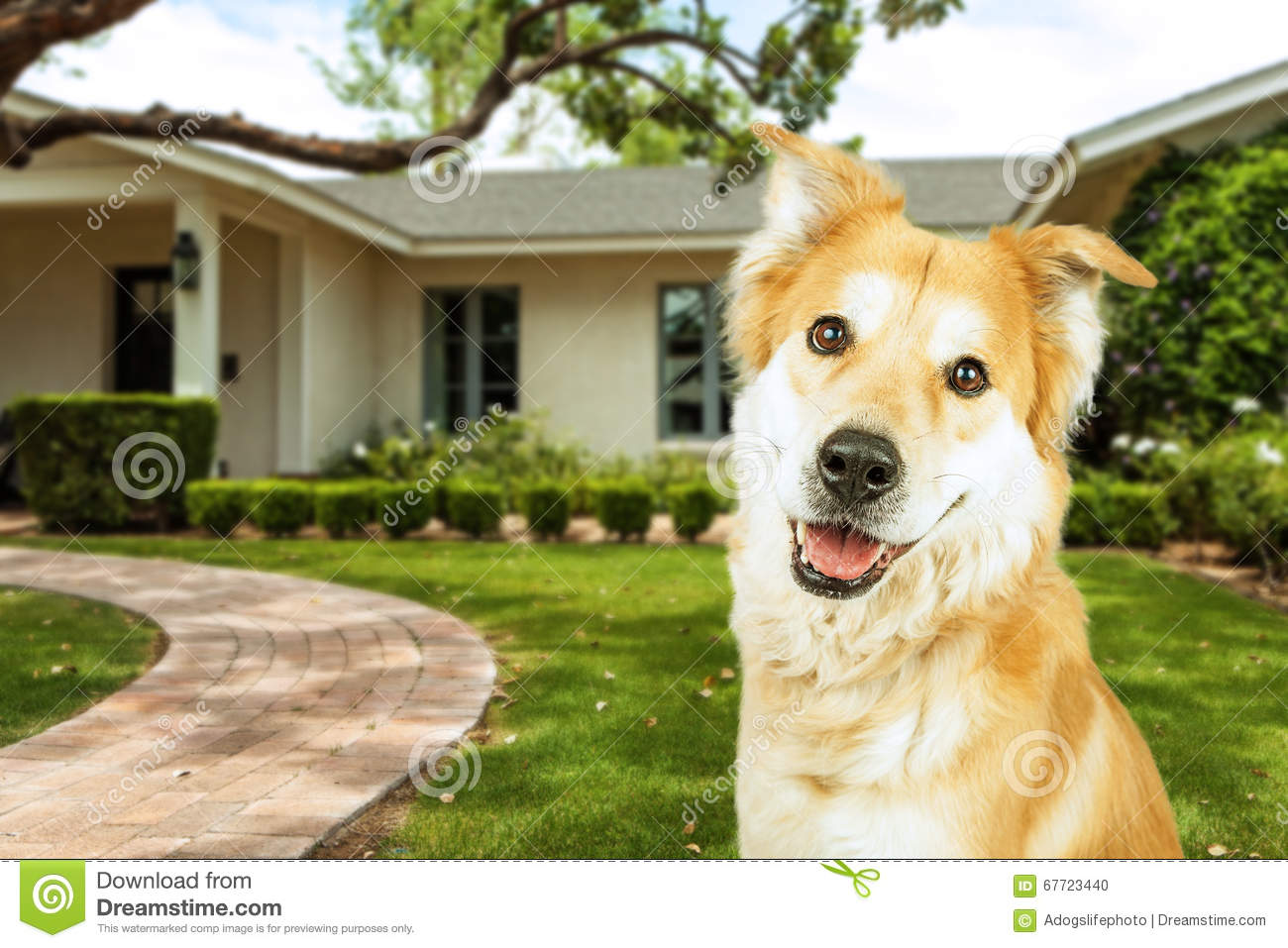 Happy Dog In Front Of Beautiful Home Stock Photo